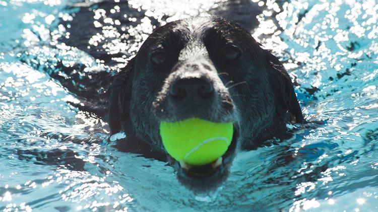 Dog Splash N' Play